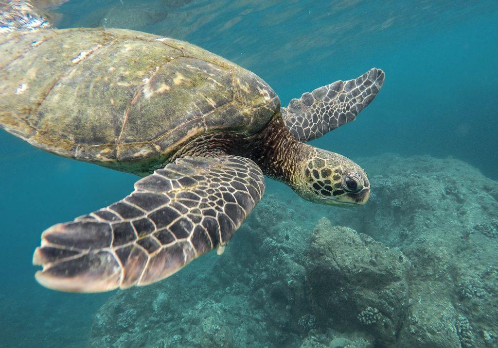 Nurkowanie z żółwiem